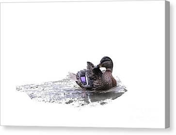 Canvas Print - Preening Duck by Nu Art