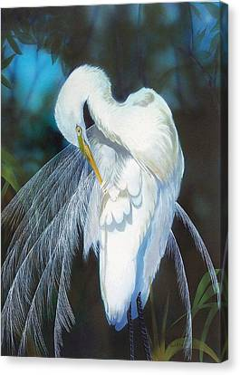 Preening Egret  Sold Canvas Print