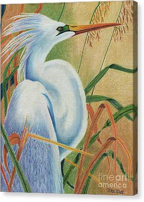 Canvas Print featuring the drawing Preening Egret by Peter Piatt