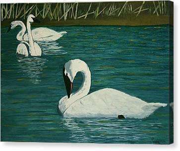 Preening Swans Canvas Print by Robert Tower