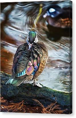 Preening Wood Duck Hen Canvas Print by Bill Tiepelman
