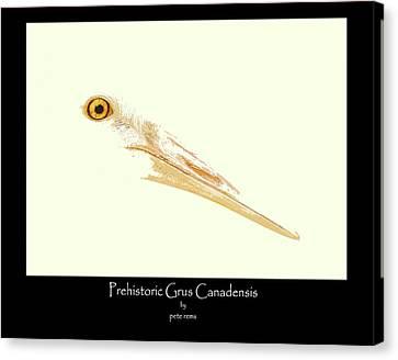 prehistoric Grus Canvas Print