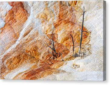 Prehistoric Trees Canvas Print by Todd Klassy