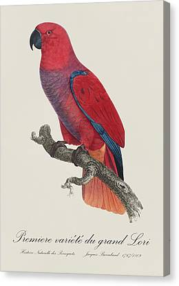 Premiere Variete Du Grand Lori / Eclectus Parrot - Restored 19thc.  Illustration By Barraband Canvas Print by Jose Elias - Sofia Pereira