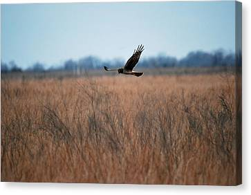 Canvas Print featuring the photograph Prepare For Landing by Teresa Blanton