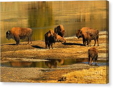 Canvas Print featuring the photograph Preparing To Cross The Yellowstone River by Adam Jewell