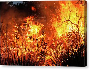 Canvas Print featuring the photograph Prescribed Burn by Arthur Dodd