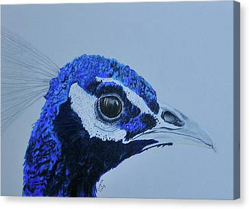 Pretty And Proud Canvas Print by Virginia Craig