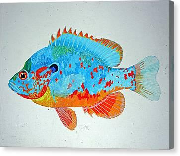 Pretty Blue Fish Canvas Print by Don Seago