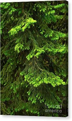 Pretty Branches Canvas Print by Svetlana Sewell