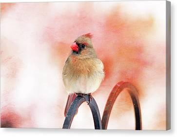 Pretty Cardinal Canvas Print