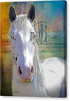 Pretty Eyes Canvas Print by Bonnie Willis