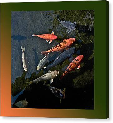 Pretty Fish Canvas Print
