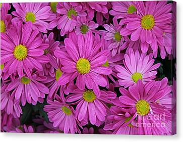 Pretty In Pink Canvas Print by CJ Park