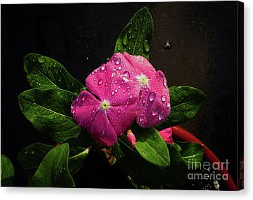 Canvas Print featuring the photograph Pretty In Pink by Douglas Stucky