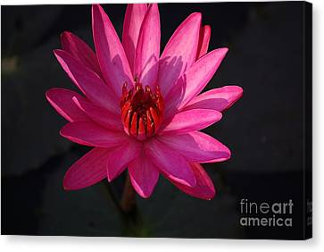 Pretty In Pink Canvas Print by John S