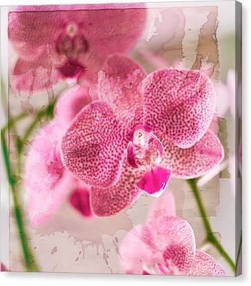 Pretty In Pink Canvas Print by Pamela Ellis
