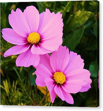 Pretty In Pink Canvas Print by Russell  Barton