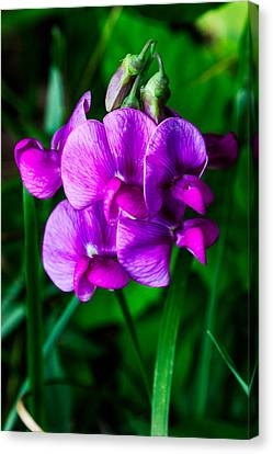 Pretty In Pink Wild Orchids Canvas Print by John Haldane