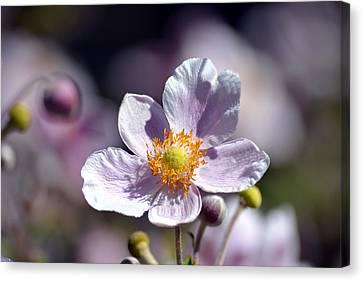 Pretty In White And Purple Canvas Print by Lena Photo Art