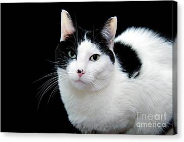 Pretty Kitty Cat 1 Canvas Print by Andee Design