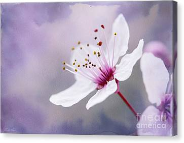 Canvas Print featuring the photograph Pretty by Linda Lees