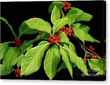 Canvas Print featuring the photograph Pretty Little Red Berries by Lois Bryan