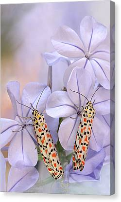 Pretty Pair Canvas Print by Jimmy Hoffman