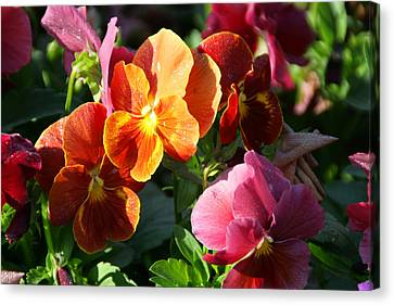 Pretty Pansies Canvas Print by Andrea Jean