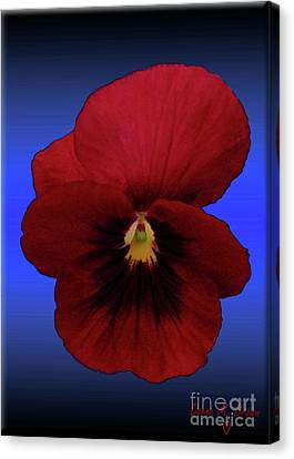 Canvas Print featuring the photograph Pretty Pansy by Donna Brown