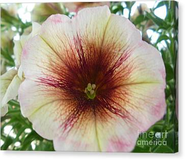 Pretty Petunia Canvas Print by Sonya Chalmers