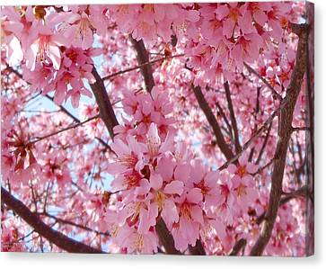 Pretty Pink Cherry Blossom Tree Canvas Print