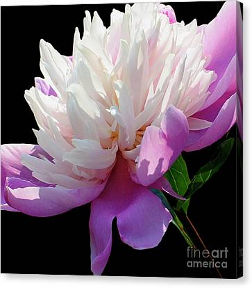 Pretty Pink Peony Flower Wall Art Canvas Print