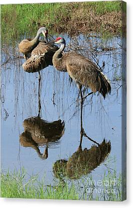 Pretty Sandhill Pair In Pond Canvas Print