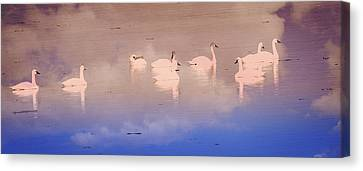 Pretty Swans All In A Ro Canvas Print