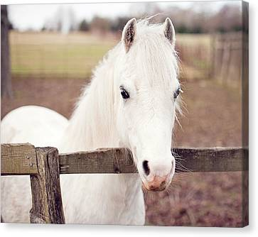 Pretty White Pony Looking Over Fence Canvas Print by Sharon Vos-Arnold