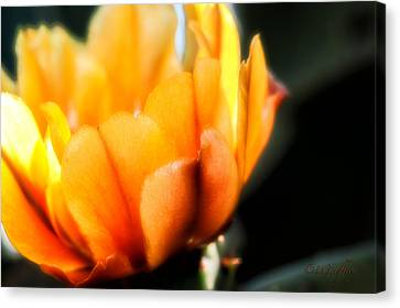 Canvas Print featuring the photograph Prickly Pear Flower by Lynn Geoffroy