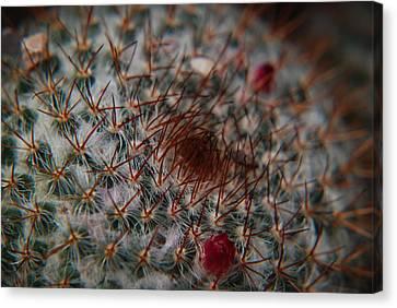 Prickly Canvas Print