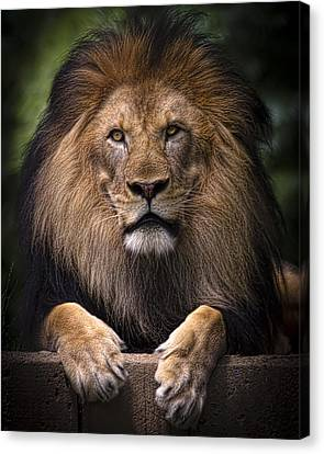 Canvas Print featuring the photograph Pride by Cheri McEachin