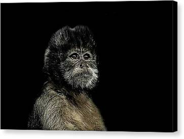 Primate Canvas Print - Pride by Paul Neville