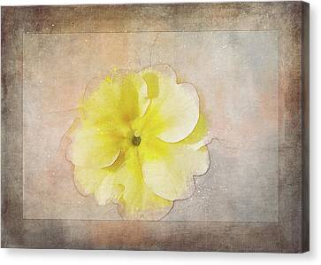 Primrose Etched In Stone Canvas Print