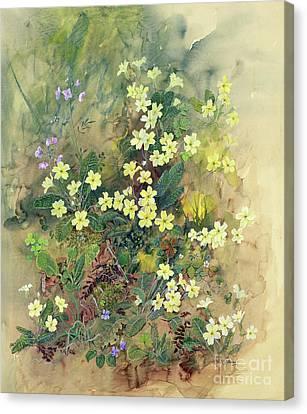 Primrose Bank Canvas Print by John Gubbins