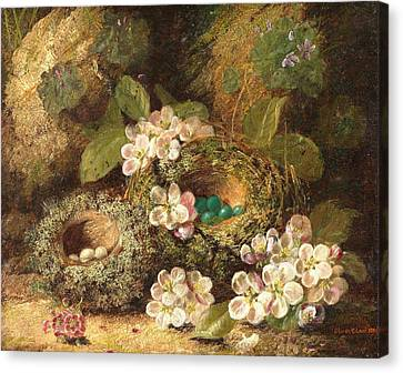 Primroses And Bird's Nests On A Mossy Bank Canvas Print by Oliver Clare