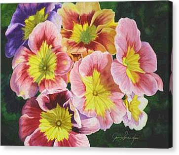 Primroses Canvas Print by Jan  Spangler