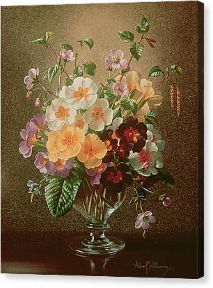 Primulas In A Glass Vase  Canvas Print by Albert Williams