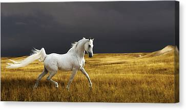 Prince Of The Plains Canvas Print by Ron  McGinnis