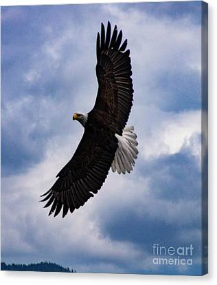 Prince Rupert Soaring Eagle Canvas Print