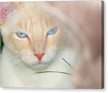 Prince Willy Canvas Print by Laura Brightwood