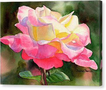 Princess Diana Rose Canvas Print by Sharon Freeman
