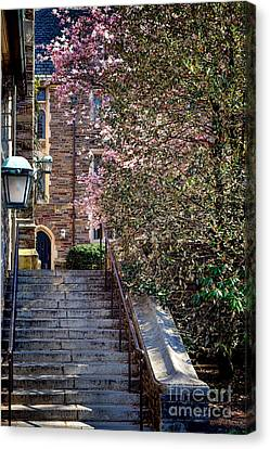 Princeton University Old Stairway Canvas Print by Olivier Le Queinec